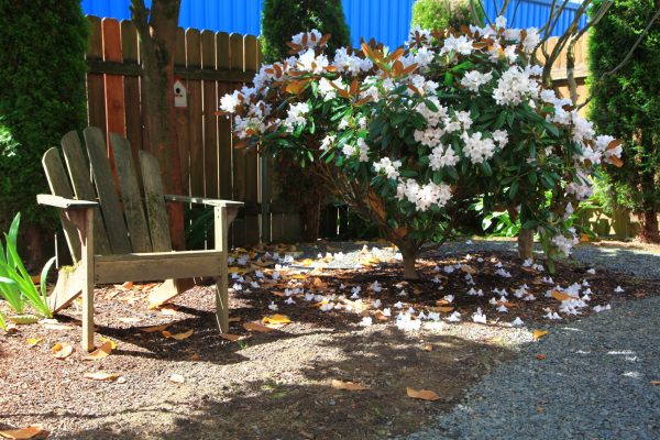 Photo an Adirondack chair and rhododendron