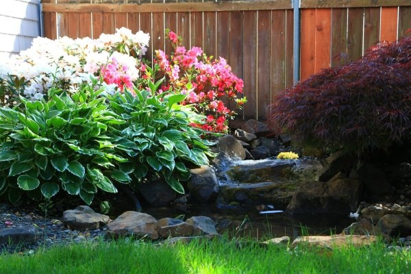 Photo of beautiful plants surrounding a water feature