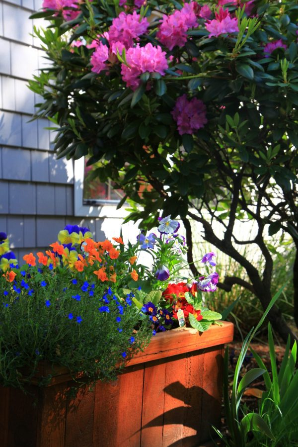 Photo of a plant box with blooming flowers